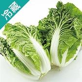 【台灣】鮮採包心白菜1粒(700g/粒)【愛買冷藏】