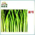 【綠藝家】C06.蘆筍種子80顆...