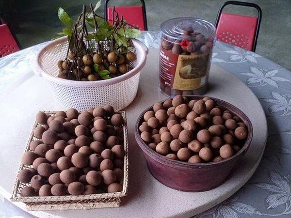 [台南]採果體驗-龍湖山生態農莊〔8月龍眼〕