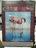 挖寶二手片-G05-038-正版DVD-動畫【紅色羽翼:火鶴之謎】迪士尼(直購價)