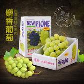 【屏聚美食】空運日本頂級麝香葡萄1串禮盒(約550G/串)_第二件起1480元