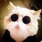 寵物貓眼鏡貓咪墨鏡復古酷貓搞怪