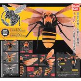 小全套2款【日本正版】胡蜂 造型轉蛋 扭蛋 轉蛋 造型扭蛋 環保蛋殼 昆蟲模型 BANDAI 萬代 - 467458SP