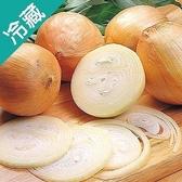 【日本】優質洋蔥1袋(1kg±5%/袋)【愛買冷藏】