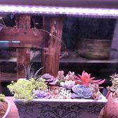 多肉補光燈上色全光譜led植物生長燈陽台蔬菜蘭花卉仿太陽光育苗  極有家 ATF
