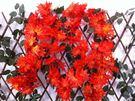 仿真花藤條紅楓葉假花塑料花花藤壁掛假樹葉...