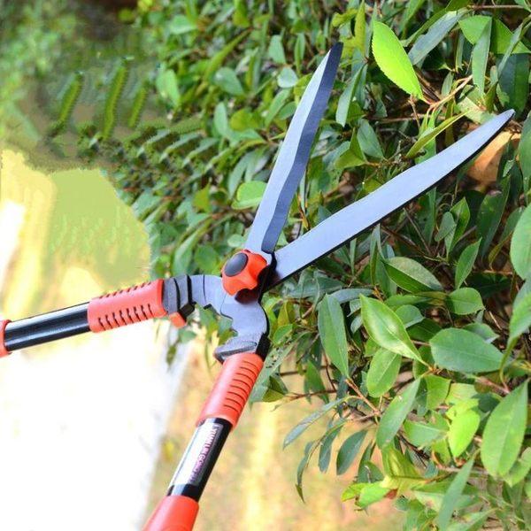 新年鉅惠 園藝剪刀修枝剪花剪子果樹樹枝粗枝剪園丁剪花枝剪園林工具