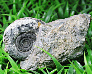 礦物晶體·礦石標本·菊石螺化石·