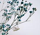 [藍色] 乾燥花滿天星花束 真花乾燥製成...