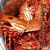 ㊣盅龐水產◇加拿大牡丹蝦Super Jumbo ◇1kg±5%/盒◇零$2250元/盒◇ 生食 刺身 握壽司 零售 批發