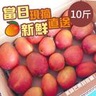 【產地直送】 屏東枋山愛文芒果10斤(顆數不等)