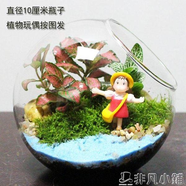 生態瓶 苔蘚微景觀 生態瓶 創意綠植 DIY植物  非凡小鋪