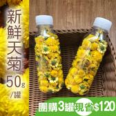 團購新鮮天菊(杭菊)-50gx3瓶