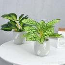 現代家居室內辦公室植物盆景仿真綠植盆栽北...