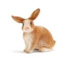Schleich 史萊奇 兔子_SH13827