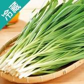 韭菜1包(250g±5%/包)【愛買冷藏】