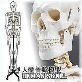170CM人體骨骼模型 人體全身骨骼 骨骼標本模型 美術醫用藝用 全新特價清倉限量一個【潮咖範兒】