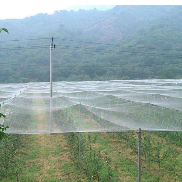 養殖網防鳥網果樹防鳥
