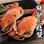 精選鮮肥三點蟹 *1隻( 280g±10%/隻 )