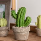 【出清$39元起】沙漠綠洲仙人掌擺飾-大-生活工場