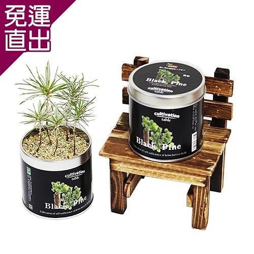 迎光 Cultivation Table栽培罐黑松【免運直出】