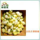 【綠藝家】大包裝G93.白色子彈辣椒種子...