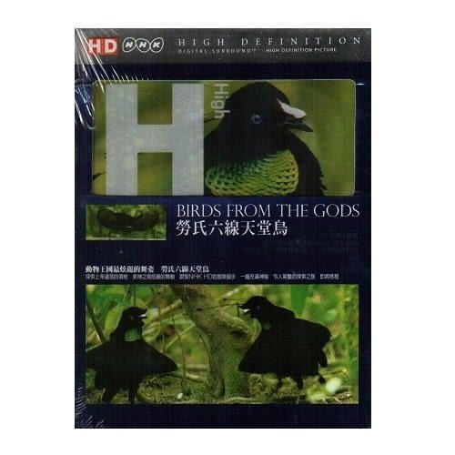 勞氏六線天堂鳥DVD HD系列 BIRDS FROM THE GODS 新幾內亞原住民的傳家之寶  (購潮8)