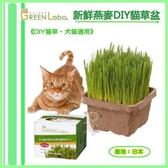 *WANG*日本 GreenLabo《DIY貓草‧犬貓適用》 新鮮貓草植栽