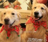 出口 圣誕鈴鐺頸圈 大型犬頸圈 寵物頸圈 大狗狗頸圈 項圈 裝飾圈 全館免運