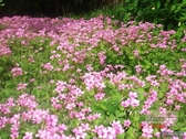 花卉種子 果園綠肥植物進口凈籽紅三葉白三葉草花種子園林護坡庭院美化花籽-三山一舍