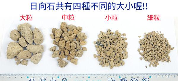 【綠藝家001-A161】日向石(博拉石.輕石)原裝包-小粒(約18公升)