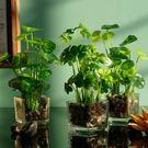 如一花開仿真綠植花卉套裝客廳擺件玻璃花瓶綠蘿植物假草小盆栽 【週年慶免運八五折】