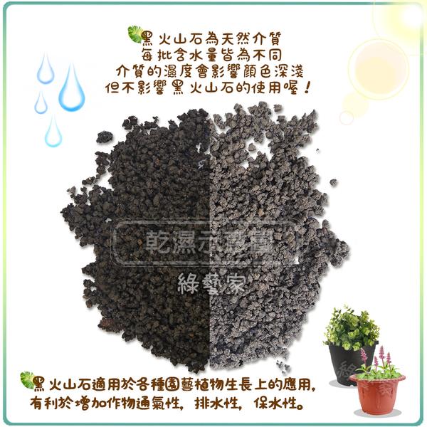 【綠藝家001-AA18】黑火山石.火山岩-中粒1公斤分裝包