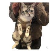 寵物籠  寵物貓包外出胸前雙肩背帶貓咪袋背便攜出門背包泰迪的攜帶外出包 igo  綠光森林
