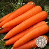 CARMO有機四季紅蘿蔔種子 園藝種子(250顆) 【FR0013】