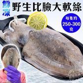 【海肉管家-全省免運】鮮凍野生比臉大軟絲X4隻(200g~300g±10%/隻)