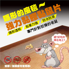 隱形魔毯 黏鼠板 黏著性強 防水防潮 適合室內使用 捕抓老鼠 捕鼠片 超大尺寸 補鼠神器 老鼠