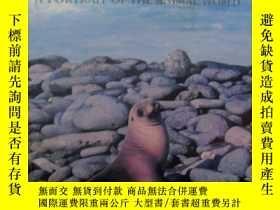 二手書博民逛書店SEALS罕見& SEA LIONS(海豹和海獅 )8開硬精裝Y