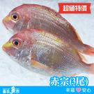 ★超值特價 免運費★【台北魚市】  赤宗3尾裝 (每尾400g~450g)