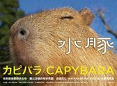 (二手書)水豚