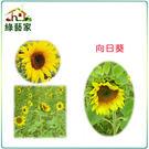【綠藝家】H01.向日葵種子150顆...