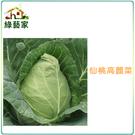 【綠藝家】大包裝B09.仙桃高麗菜種子1...