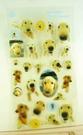 【震撼精品百貨】新大頭狗_The Dog~透明貼紙-黃金獵犬