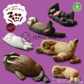 扭蛋 熊貓之穴 休眠動物園 第6彈 睡覺獅子 Tomy扭蛋 二度3C