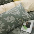鴻宇 雙人床包組 100%精梳純棉 莫凡比 台灣製C20103