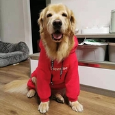 寵物衣服寵物衣服金毛大狗拉布拉多薩摩中大型犬薄款套頭連帽四腳連帽T恤【全館免運】