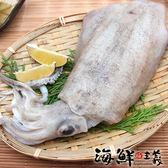 【海鮮主義】軟絲 600g~800g/隻