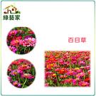 【綠藝家】H02.百日草種子200顆...