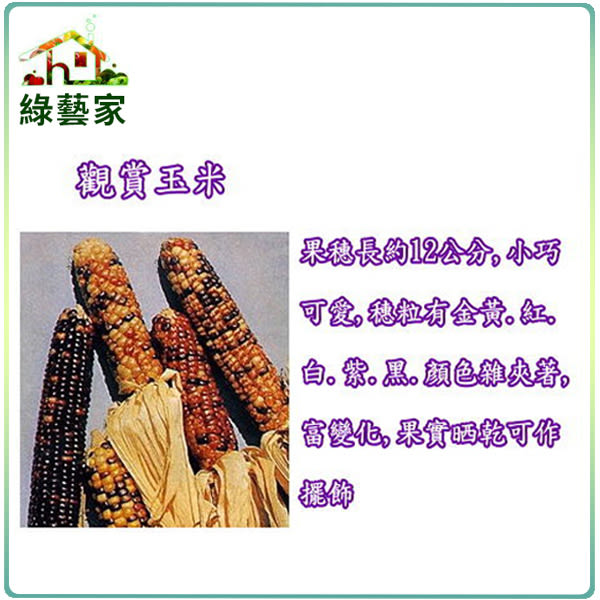 【綠藝家】P04.觀賞玉米種子(彩虹)5顆