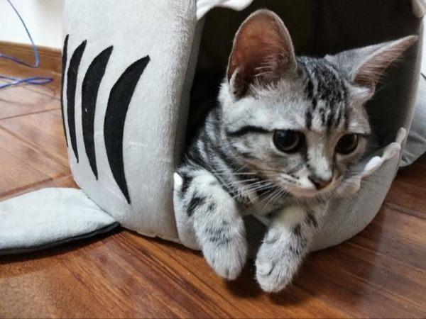貓窩夏天涼爽封閉式貓睡袋貓墊子寵物用品貓咪房子貓屋可拆洗貓床  樂活生活館